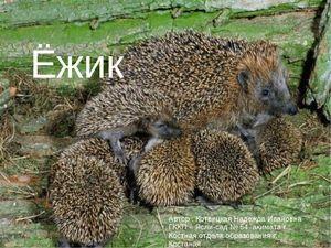 Običajni jež: opis, značaj, habitat in potomstvo