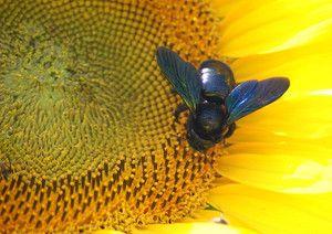 Pregled čebelarskega tesarstva