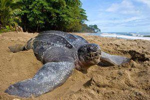 Opis največje želve na svetu