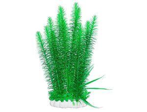 Značilnosti akvarijskih rastlin Elodea