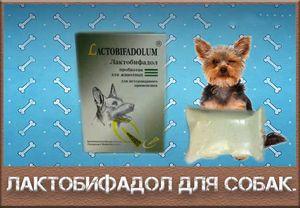 Značilnosti uporabe laktobiofadola za pse