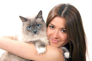 Otitis pri mačkah simptomi in zdravljenje