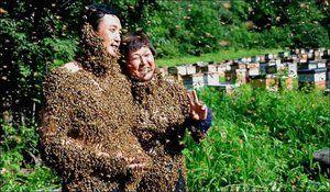 Zakaj je bil roj čebel ali osinov sanjal?