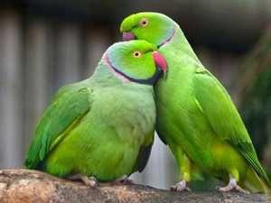 Ograje papagaji