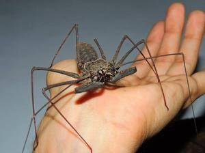 Spider se nanaša na živali ali žuželke
