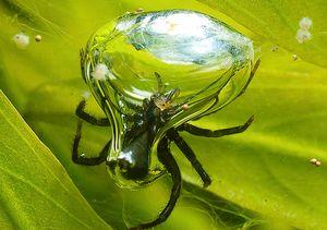 Vodni pajki - razvoj in način življenja