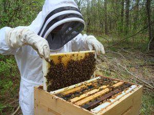 Čebelarstvo za začetnike: nasveti in triki