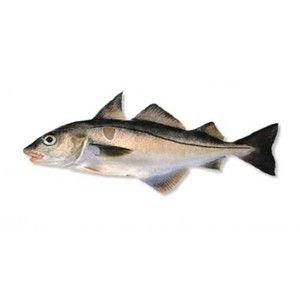 Vahnja - opis rib in njegova kulinarična vrednost