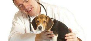Prednosti in slabosti kastracije psov