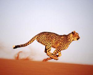 Hitrost geparda