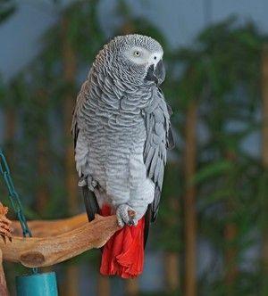 Opis zunanjosti papige je vroča