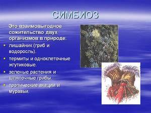 Primeri in opis simbioze pri divjih živalih
