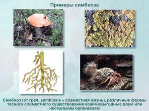 Simbioza v naravi