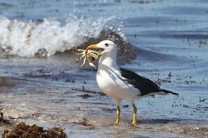 Ptica albatros-habitata