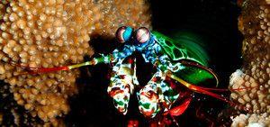 Pogled na rak mantisa
