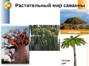 Vrste travne savane