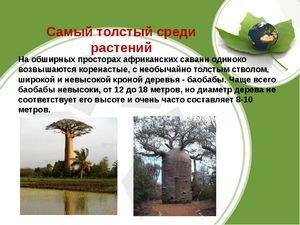 Drevesa in rastline savana