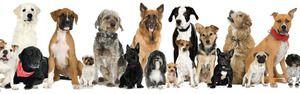 Raznolikost pasem psov: imena, fotografije, nasveti
