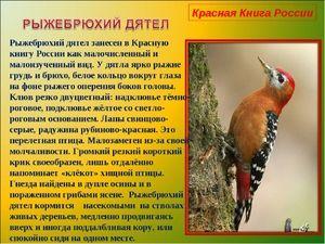 Redke in ogrožene vrste ptic, vključene v rdečo knjigo