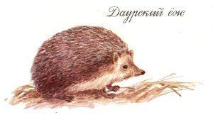 Daurijski jež v gozdu
