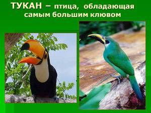 Kateri sovražniki imajo ptice