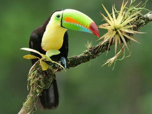 Dobro obveščanje ptic