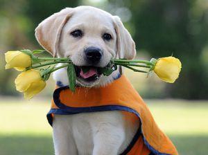 Najbolj prijazne pasme psov: vrste in opis