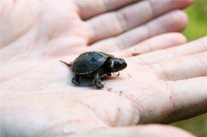 Najmanjše živali na svetu