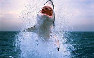 Najbolj nevarni morski psi na svetu. 10 najnevarnejših morskih psov