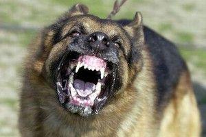 Najbolj nevarne pasme psov na svetu za ljudi