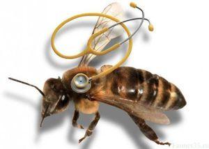 Najpogostejše bolezni čebel in njihovo zdravljenje