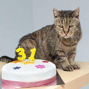 Katera mačka je najstarejša