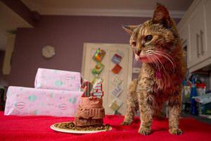 Najstarejša mačka na svetu