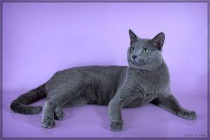 Narava modrih mačk