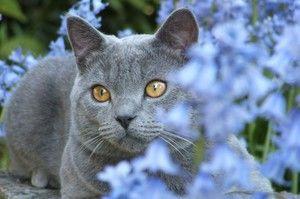 Kaj lahko trpi mačka?