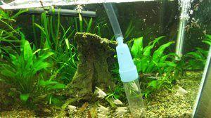 Sifon za čiščenje akvarija. Vrste akvarijskih sifonov in priporočil