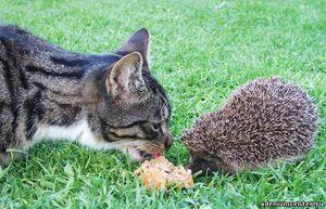 Koliko let lahko hedgehogovi živijo v naravi in doma