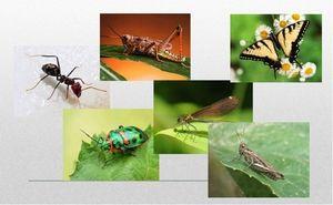 Koliko nog ima žuželke?