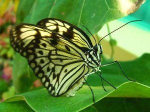 Koliko metuljev ima noge. Število nog