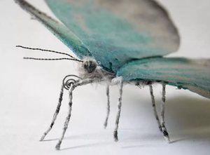 Sprememba metulja
