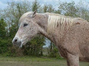 Koliko konjev živi v povprečju