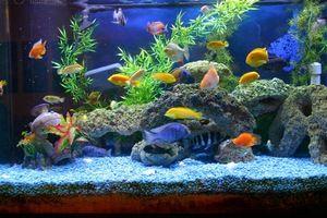 Kako dolgo traja ohranjanje vode za akvarij?