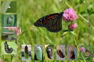 Koliko metuljev živi: življenjska doba vseh ciklov