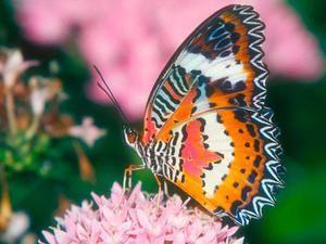 Koliko metuljev živi