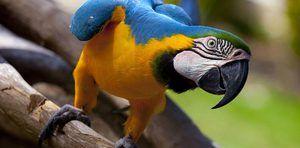 Pričakovana življenjska doba papiga