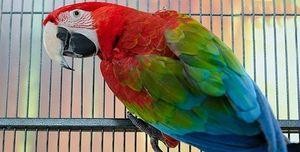Koliko živih papagaja