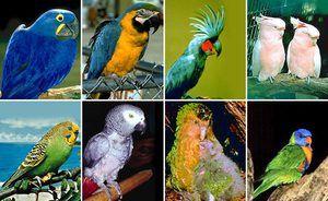 Skrb za majhne papige