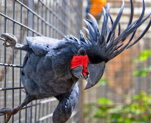 Koliko let živi papagaji