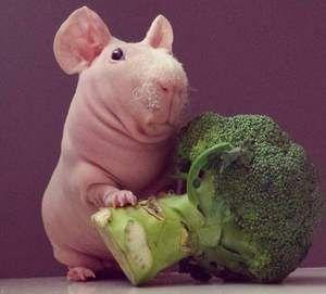 Brokoli in suh