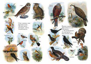Seznam ptic Rusije iz enciklopedije